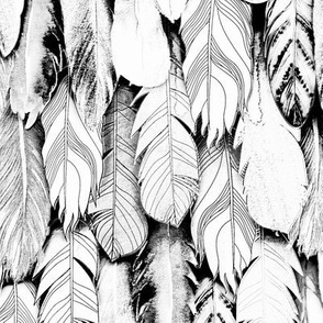 White & Black Feathers