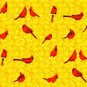Cardinals & Forsythia