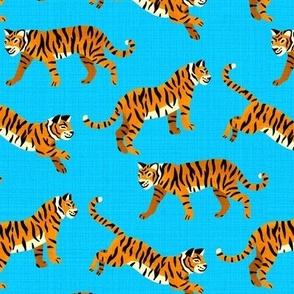 Bengal Tigers - Electric Blue (Medium Version)