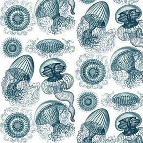 Ernst Haeckel Leptomedusae Jellyfish  Cerulean
