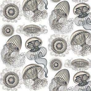 Ernst Haeckel Leptomedusae Jellyfish  Tearose