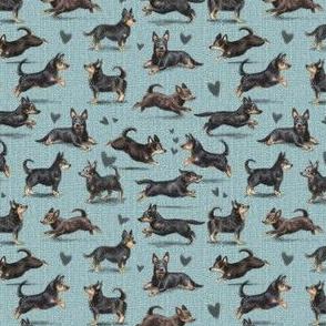 The Lancashire Heeler Dog Teal Version