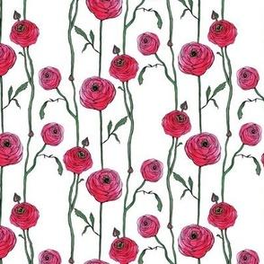 Pink Petite Ranunculus
