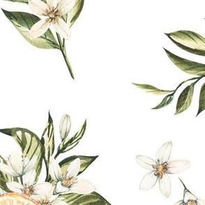 Watercolor pattern of mandarin oranges fruit branches, bouquets of white flowers and tangerines