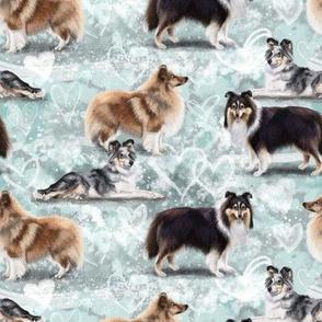 The Shetland Sheepdog Sheltie
