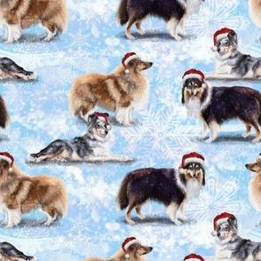The Christmas Shetland Sheepdog
