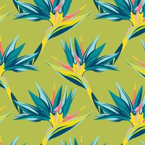 Bird of Paradise II - Chartreuse