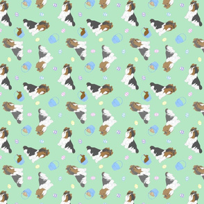 Tiny Biewer terriers - Easter