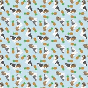 Tiny Biewer terriers - pineapples