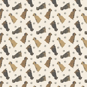 Tiny Border Terriers - tan