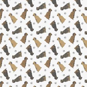 Tiny Border Terriers - gray