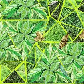 Green Moths in Grass - Bright