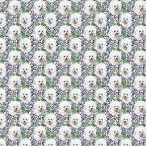 Small Floral Bichon Frise portraits