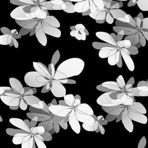 Flowers on black background - Fleurs sur fond noir