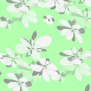 Flowers on light green background - Fleurs sur fond vert clair