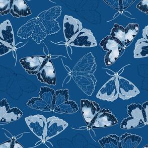 Moths in Classic Blue