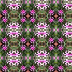 Cactus Blooms Chintz