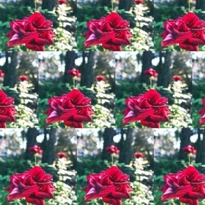 Patchwork of Red