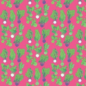 Kohlrabi [pink]