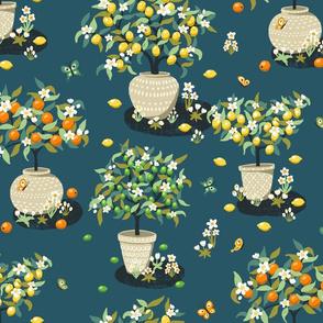 Citrus Trees Small Scale