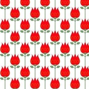 Tulip Reddish