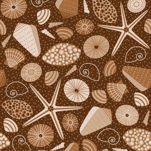 brown seashells