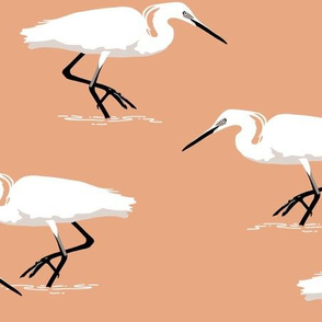 White herons on coral