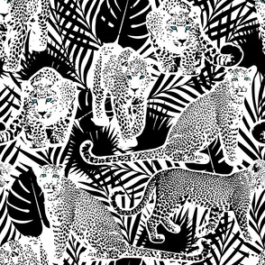 Wild Leopards Black and White