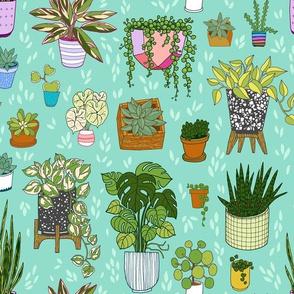 houseplants - turquoise