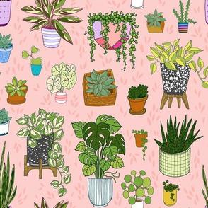 houseplants - blush