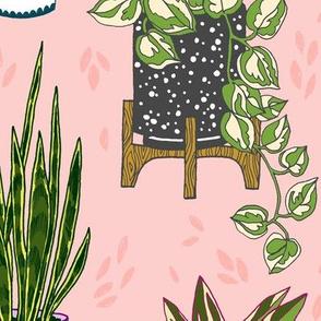 houseplants - large scale blush