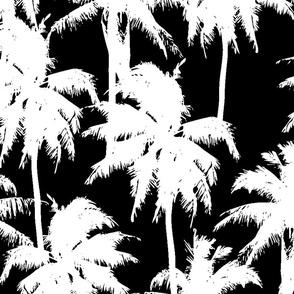 BW palms