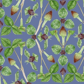 Wake Robin & Jack-in-the-Pulpit