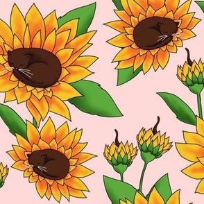 Sunflower Cats