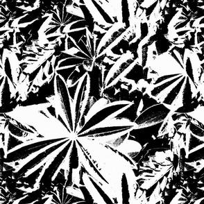 Petra Bonny lupine 1 zwart wit
