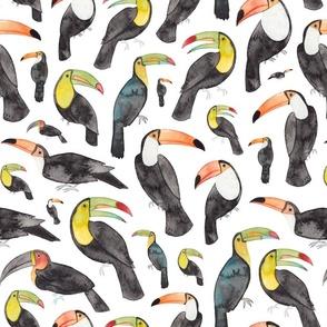Exotic Toucans
