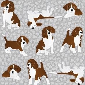 Beagle dog breed - grey