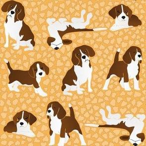 Beagle dog breed - orange