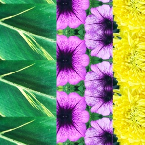 Green Purple & Gold Jazz