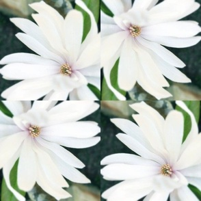 White Whirl of Flowers