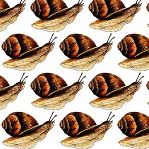 Simple snail simply  snailing
