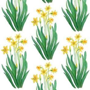 daffodil spring floral
