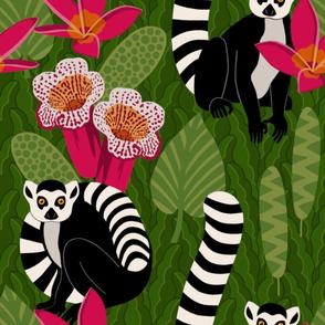 madagascar ringtail lemur