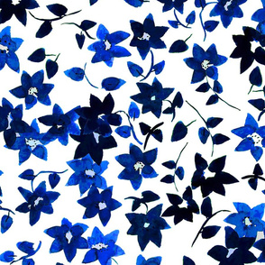Blue Bouganvillia
