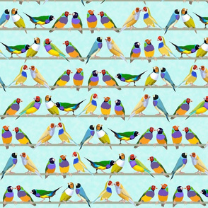 Glorious Gouldian finches-pale aqua