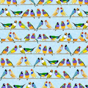 Glorious Gouldian Finches-pale blue