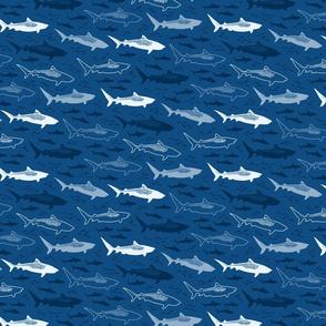 stealth tiger sharks (smaller)