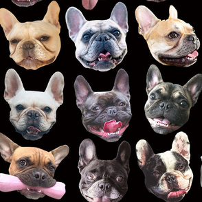 French Bulldogs black large