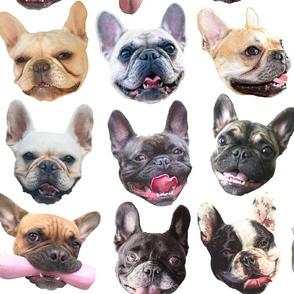 French Bulldogs white large