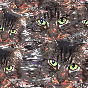 Maine Coon Green Cat Eyes white gray background